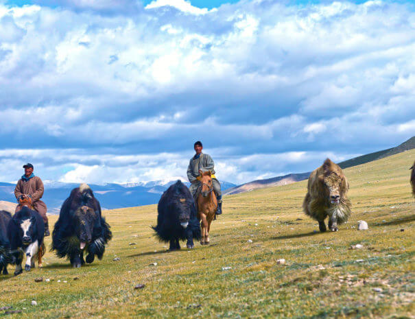 Mongolei_Nomaden_Yak