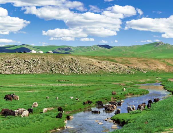 Mongolei_Yack_Fluss